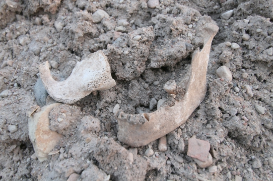 Žeimelio kapinyno archeologiniai tyrinėjimai