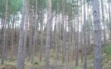 Luokavos piliakalnis, Naujosios Akmenės seniūnija, Akmenės r.