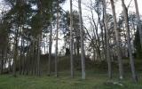 Pelaniškių (Kalnuočių) piliakalnis, Pašvitinio seniūnija, Pakruojo r.