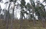 Ezerlūkų piliakalnis, Bikstu pagasts, Dobeles nov.